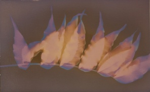 Lumen Print